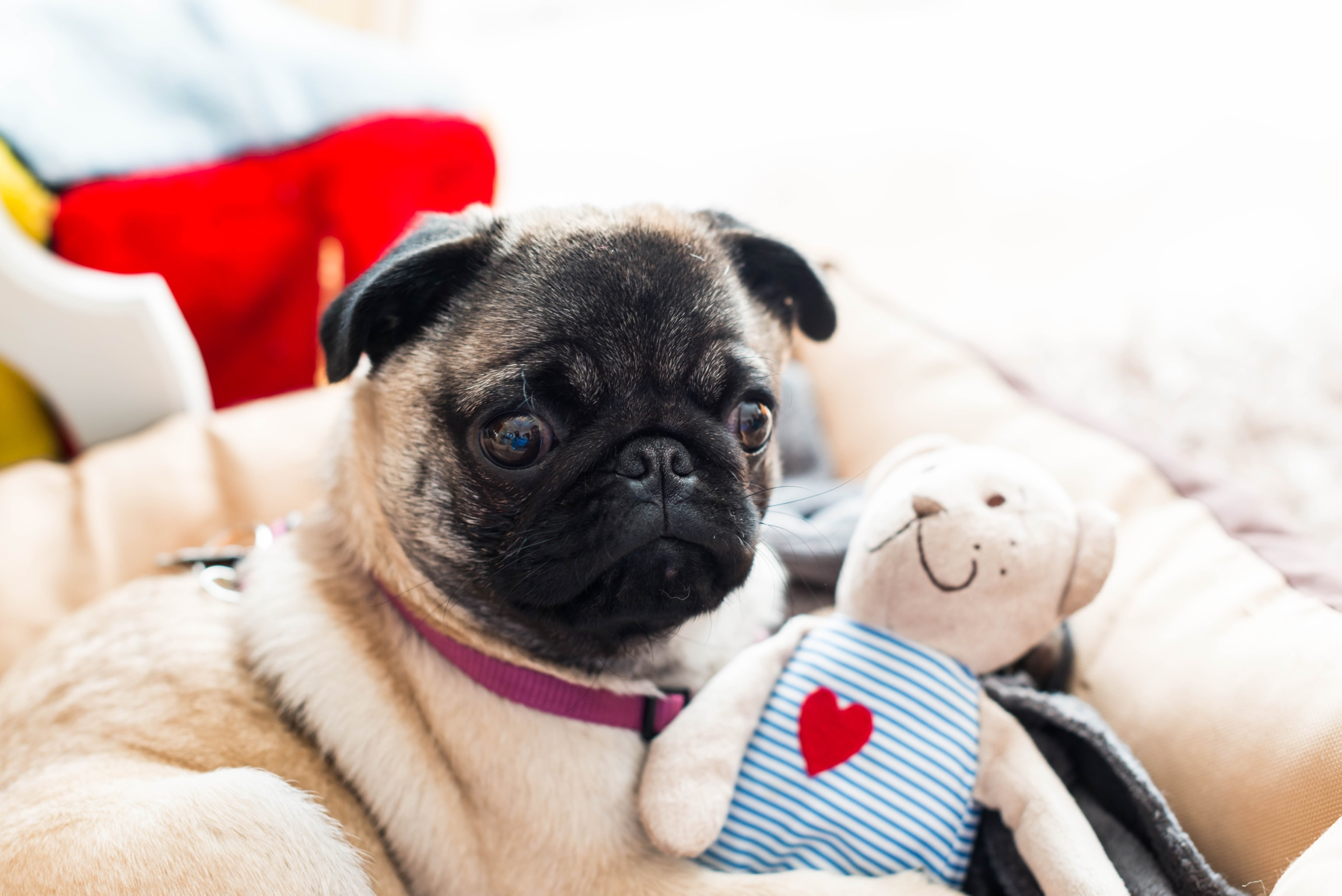 Say hello to the pug : 7 Fakten über Emma Mops