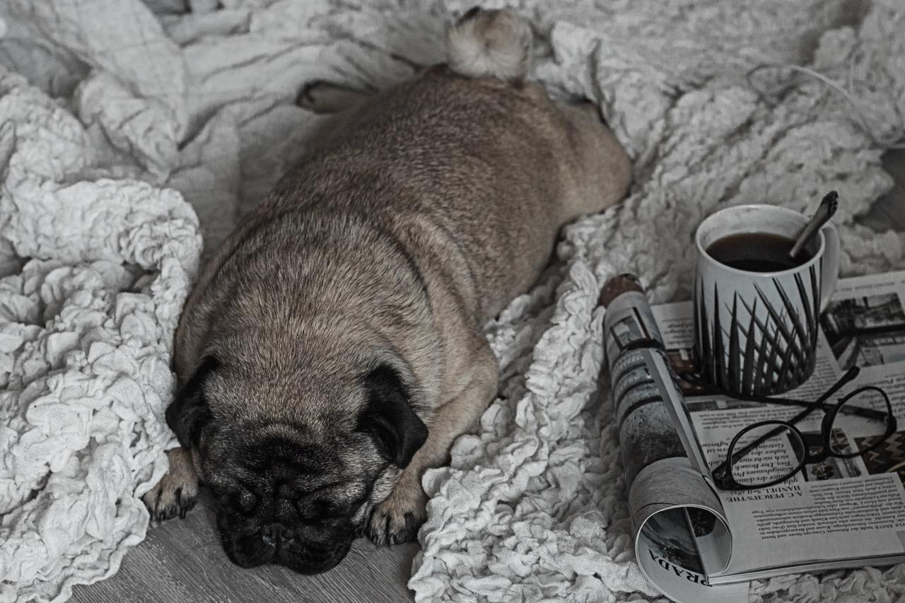 Von Kaffeetassen und Morgenritualen