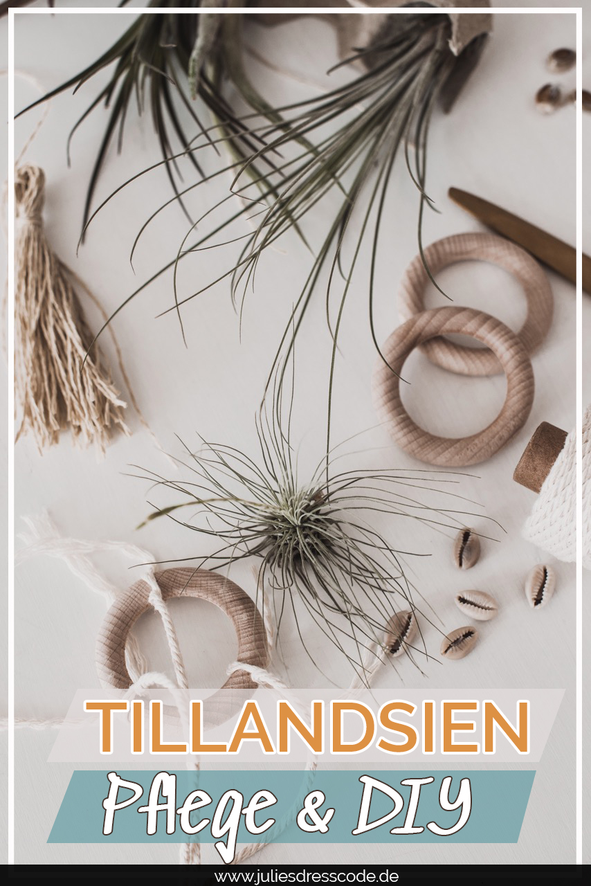 Pflanzentrend Tillandsien : DIY & Pflegetipps Julies Dresscode Fashion & Lifestyle Blog