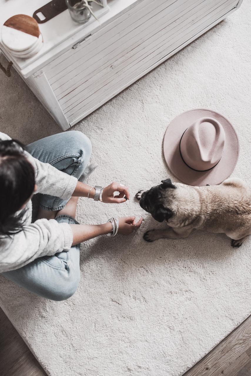 Teppich mit Haustieren - so triffst du die richtige Wahl Julies Dresscode Fashion & Lifestyle Blog