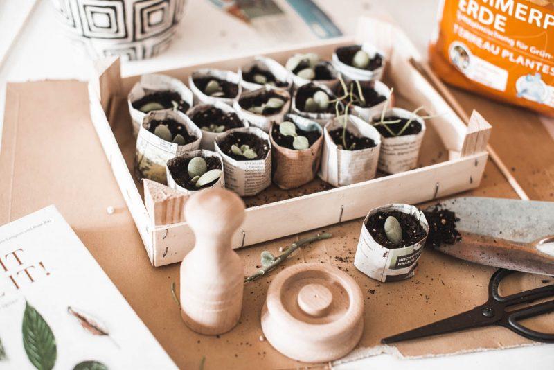 Zimmerpflanzen vermehren mit Anzuchttöpfchen aus Papier